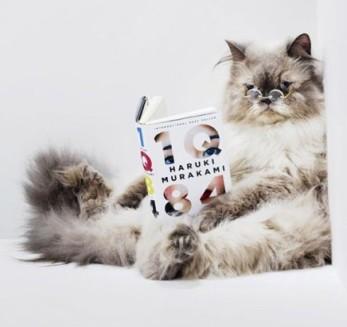 gato-gracioso-leyendo-haruki-murakami