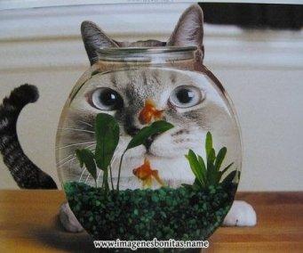 gato_observador